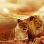 Répartition des animaux dans le monde si l'homme n'avait jamais existé