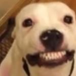 Ce chien sourit pour la camera