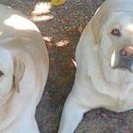 Cloner son chien décédé : est-ce un progrès ?