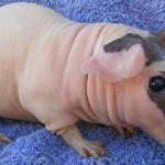 15 animaux totalement méconnaissables sans leur pelage