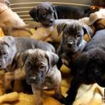 France : Vente d'animaux interdite pour les particuliers, la SPA de Thionville se félicite et enquête