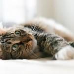 83% des Français pensent que nos amis les bêtes aident à guérir