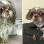 Il toilette gratuitement des chiens abandonnés pour les aider à trouver un maître