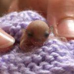 Le plus petit animal qu'ils ont soigné est ?