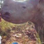 Cette vétérinaire a vraiment un don avec les animaux