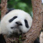 Changement climatique: ces animaux menacés de disparition d'ici à 2080