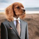 Apporter son animal au travail pour réduire le stress ?