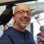 Une corneille noire amadouée par un vétérinaire
