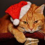 Un animal comme cadeau de Noël : est-ce vraiment une bonne idée ?