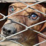 Californie: les animaleries réservées aux chiens abandonnés
