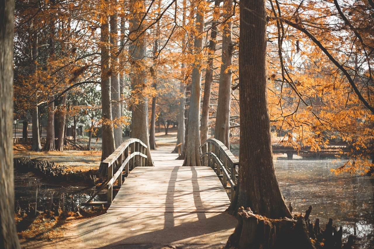 bridge, park, outside