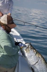 Releasing a Key West tarpon