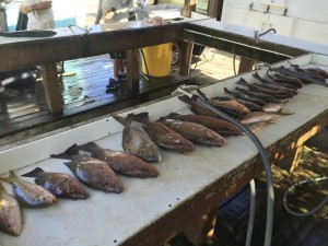 Food fish caught in the Key West backcountry