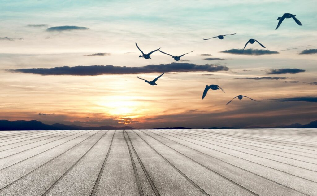 sunset over land with lines moving toward a focal point and a sky with some clouds and birds flying