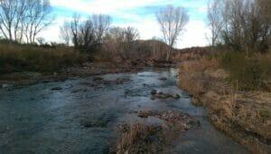 San Pedro River AZ 03