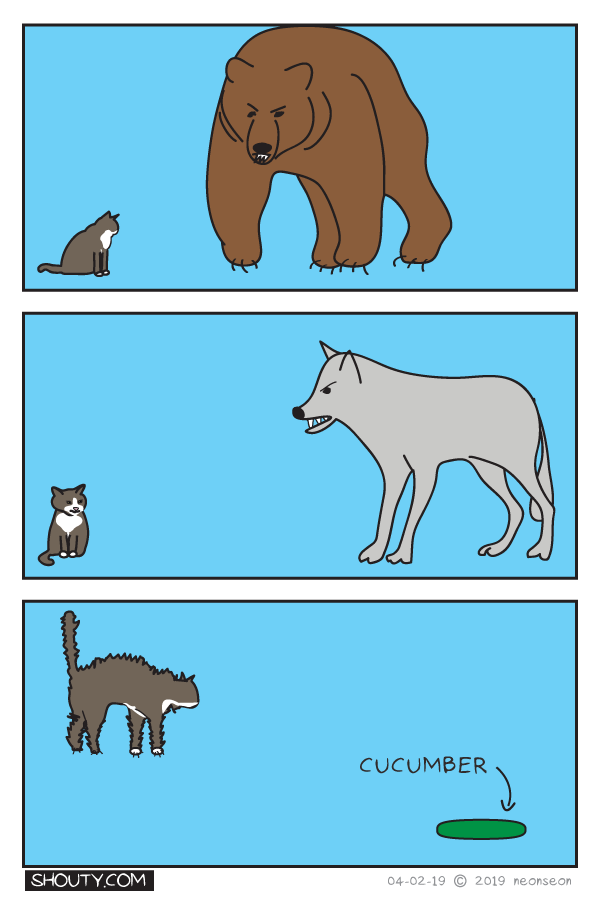 Cats and Fear Comic by Shouty