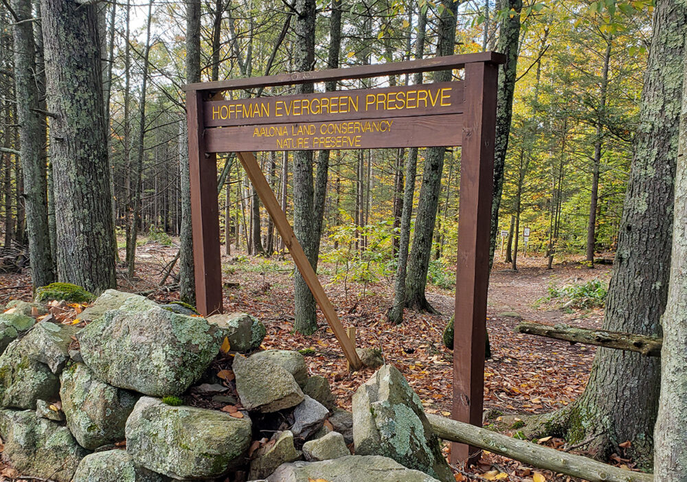 CTSG, Avalonia Project Looks To Prepare Forest For The Future