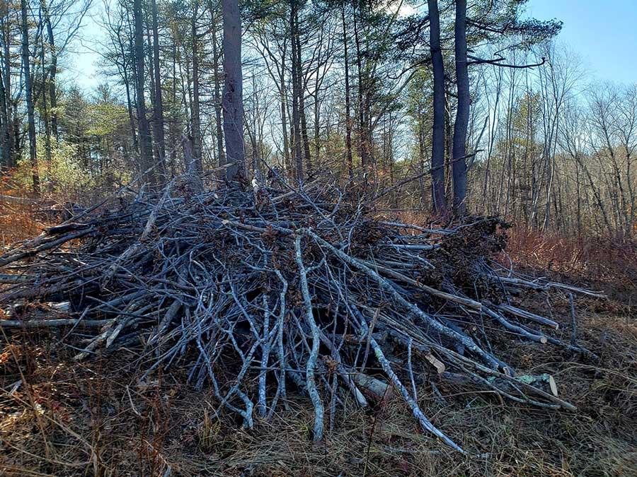 Building Bunny Brush Piles