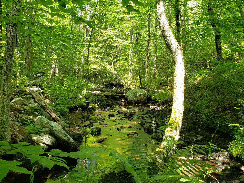 Avalonia Land Conservancy Acquires The Herman E. Sheets Family Forest In North Stonington, CT
