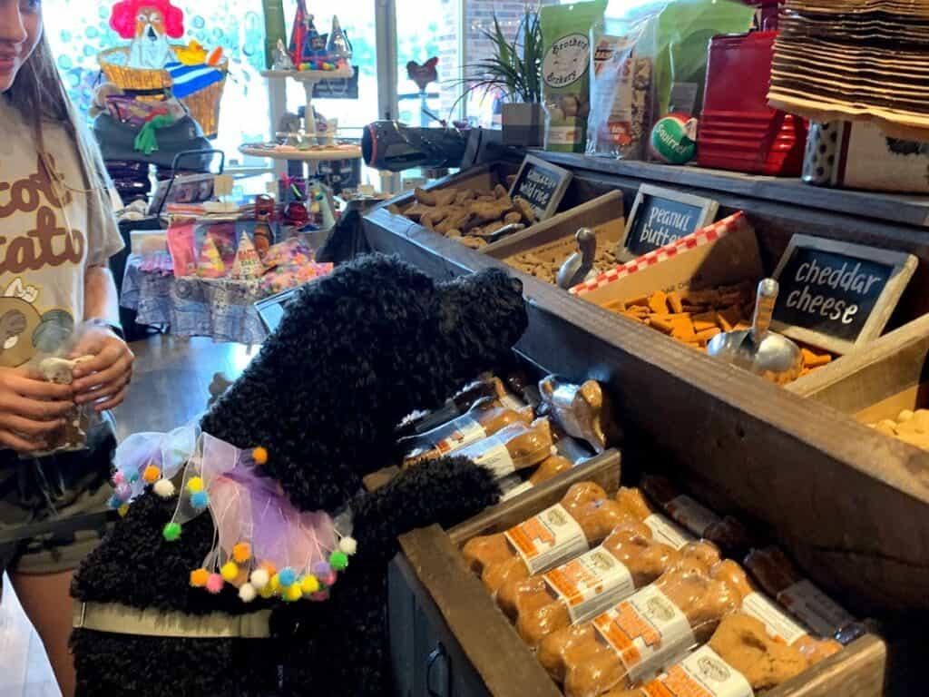 dogs love bulk treats at Patsy's Pet Market