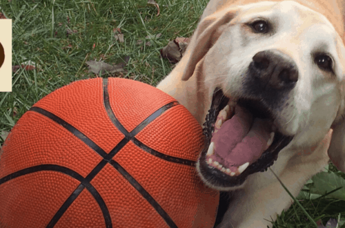 paws pet resort houston dog boarding and daycare