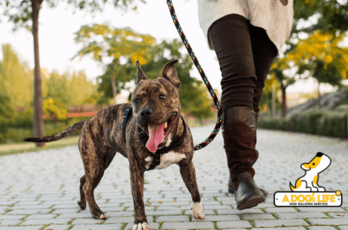a dogs life dog walking service in houston