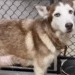 canela A548712 Harris County Animal Shelter