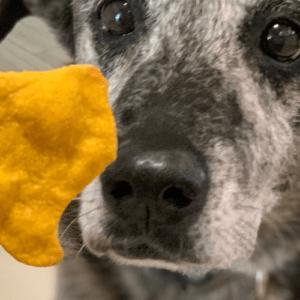 pumpkin and peanut butter dog treat