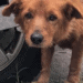 tumor pup houston animal justice league