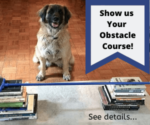 dog jumping a broom with stack of books. text says show us your obstacle course.