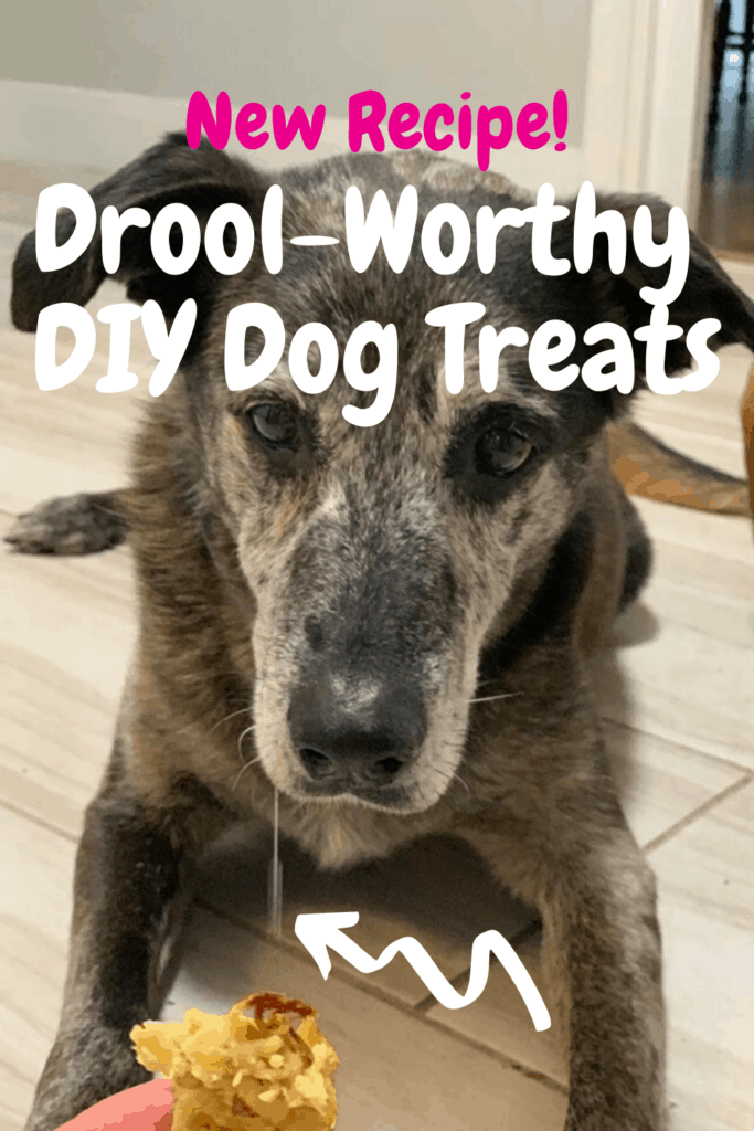pinterest pin for diy dog treats recipe showing brown dog drooling with dog treat.