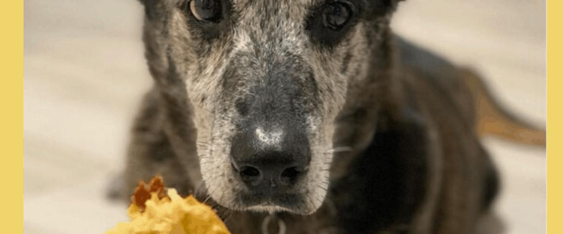 brown dog looks at DIY Dog Treat