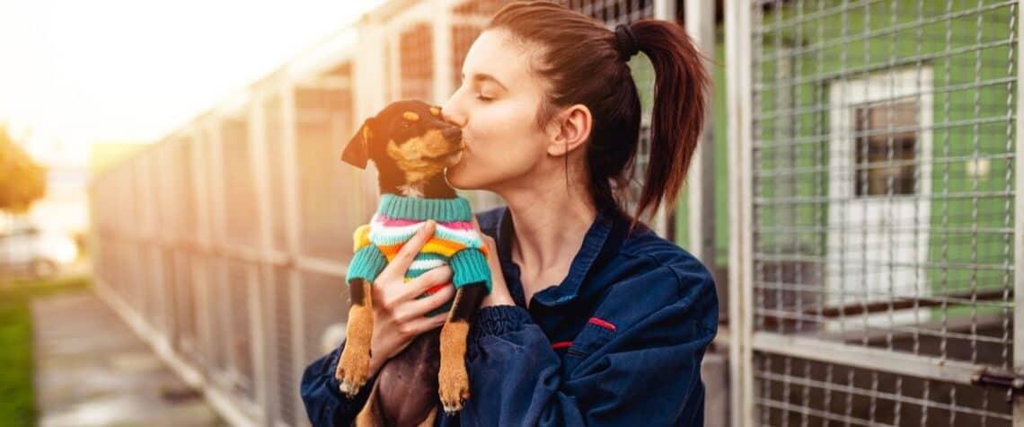animal shelter volunteer in houston