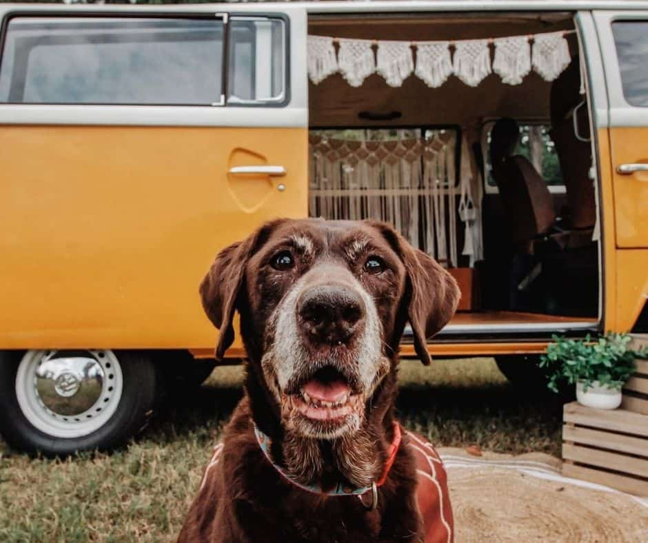 Fetching Snapshots dog photography