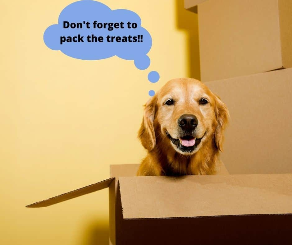moving with your dog to a pet friendly home in houston, golden retriever in a moving box.