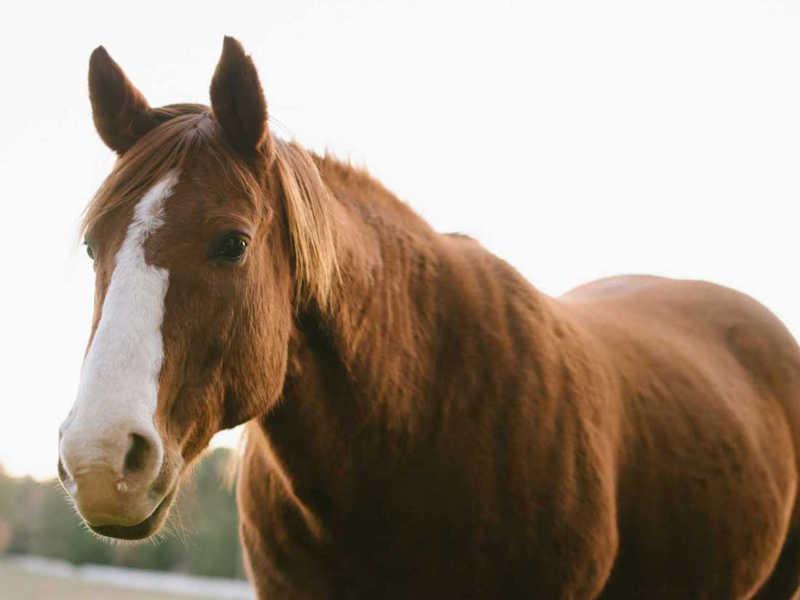 Hope Reins - Horse Stories - Buddy 800x600