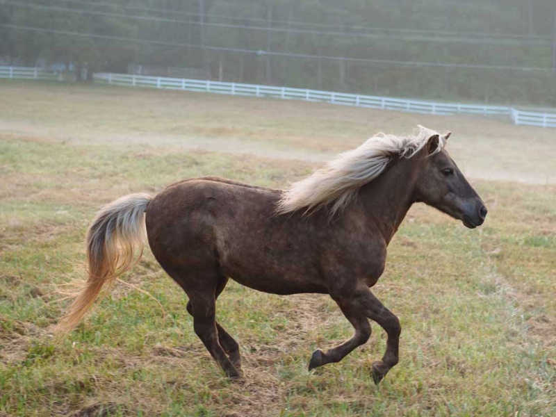 Hope Reins - Horse Stories - Gabe 800x600
