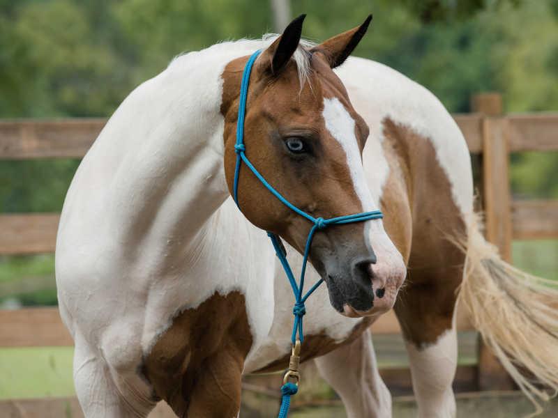 Hope Reins - Horse Stories - Joy 800x600