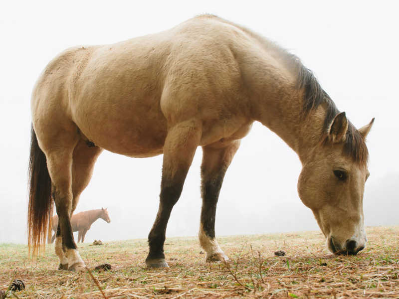 Hope Reins - Horse Stories - Spirit 800x600