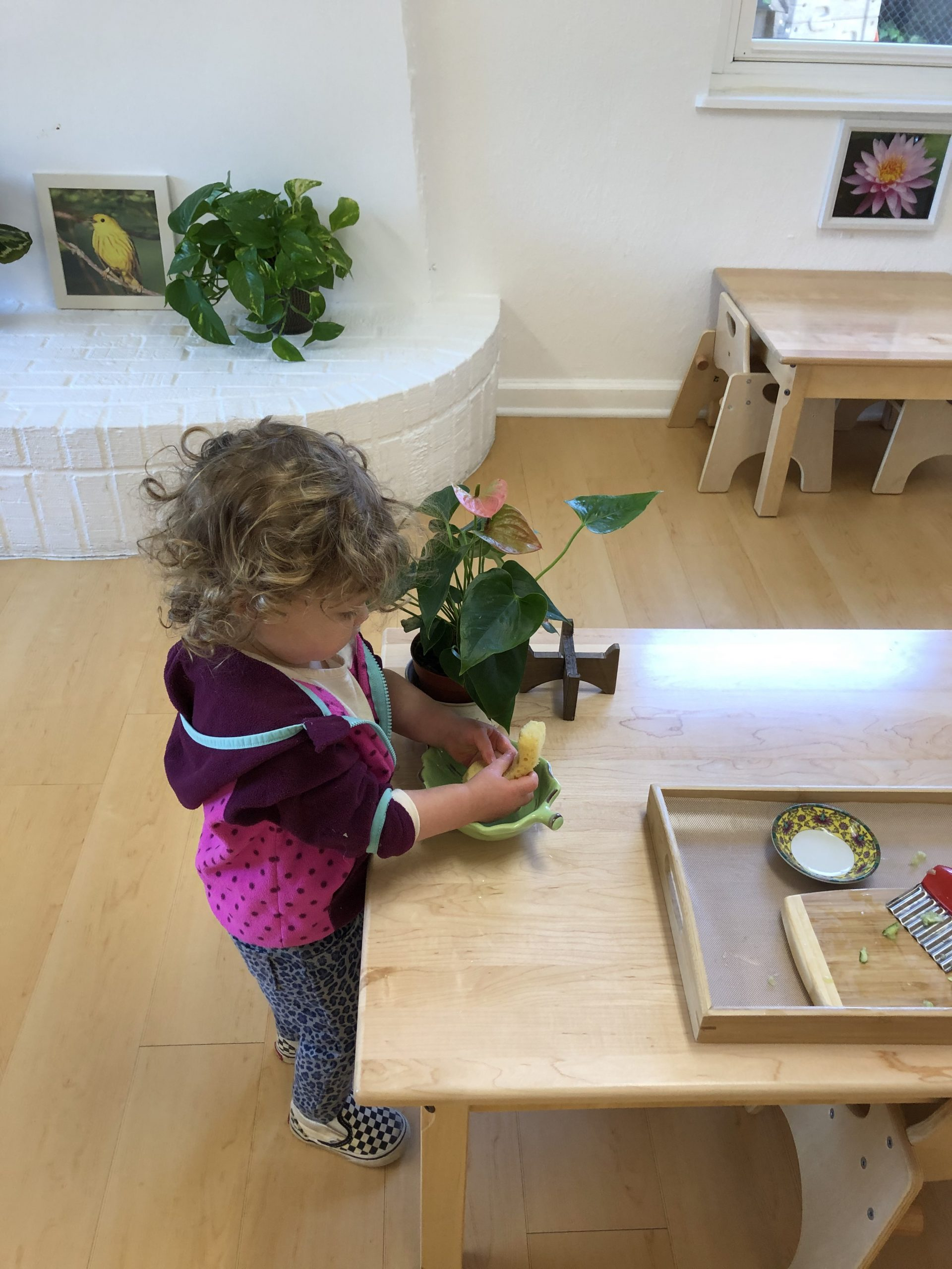 Toddler cleaning her plant in a Montessori classroom