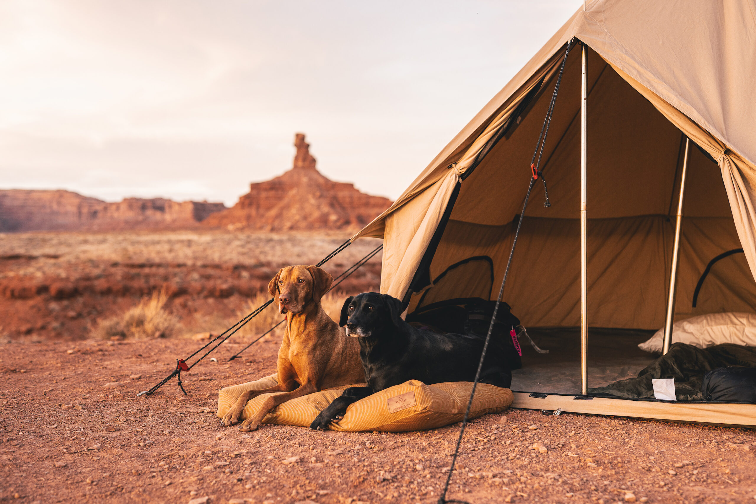 glamping tent dogs dog bed canvas tent desert outdoors