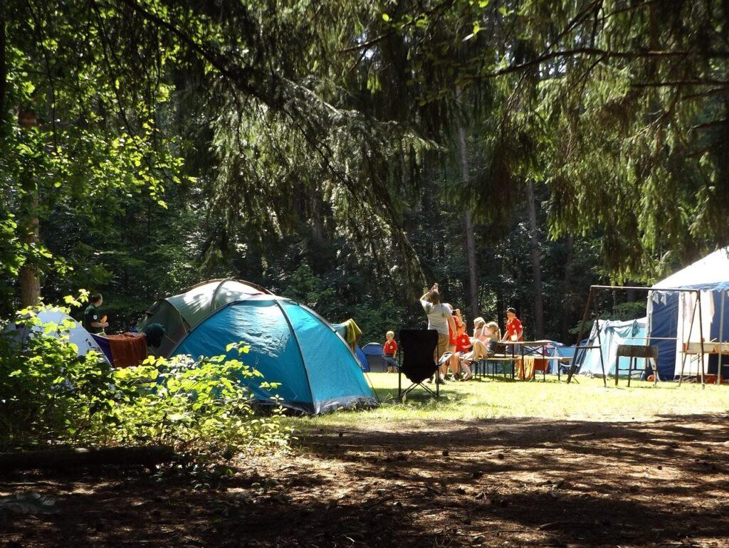 camp, forest, summer