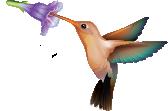 MediaScript Color Logo No Text
