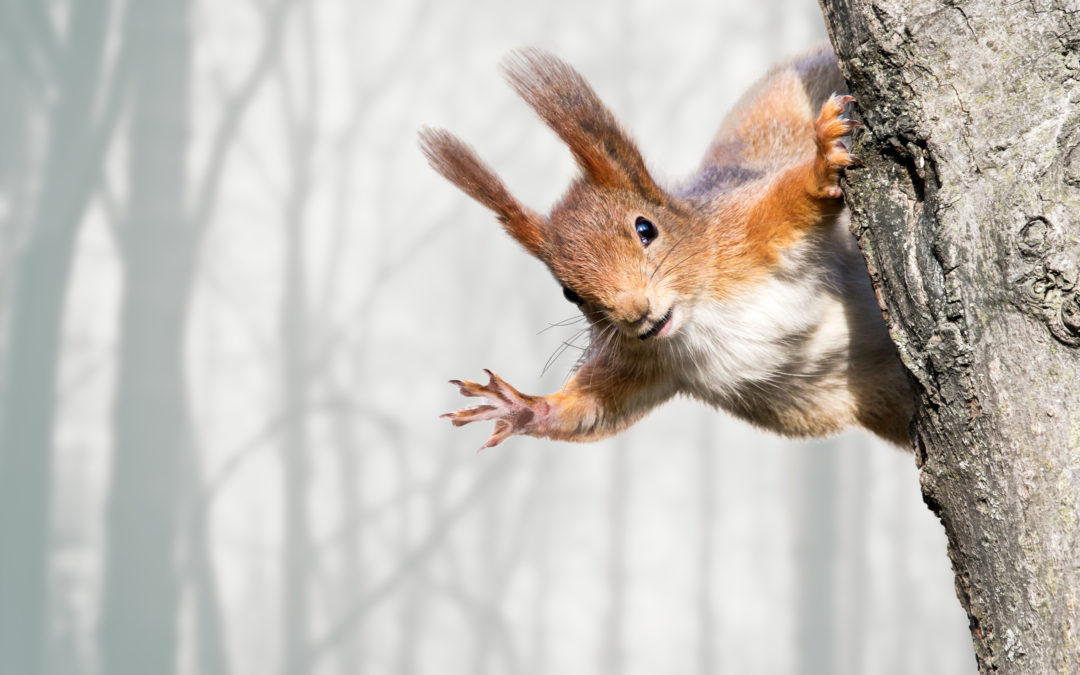 """Oh Look – Squirrel""… Why you should use other video platforms (in addition to YouTube) to house your marketing videos."