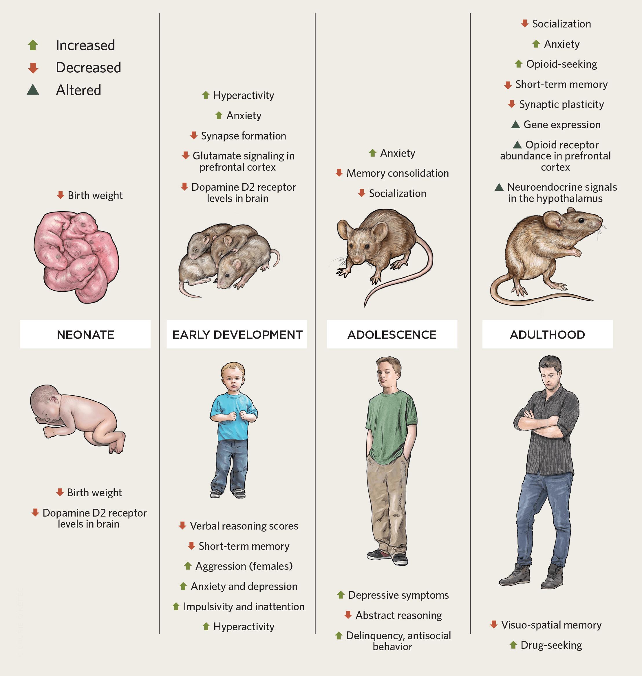 Cannabis in Pregnant Mice