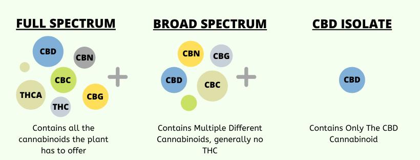 Infographic: CBD Isolate VS Broad and Full Spectrum CBD