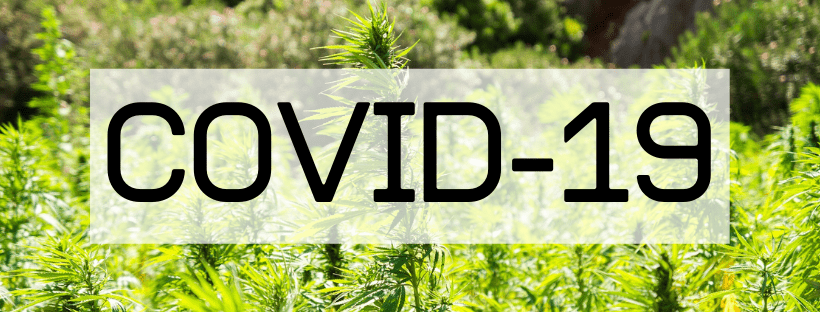 Covid-19 and Cannabis