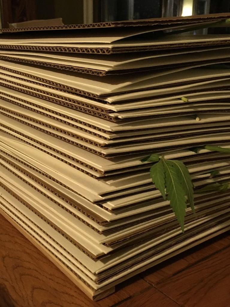 Canndor Herbarium