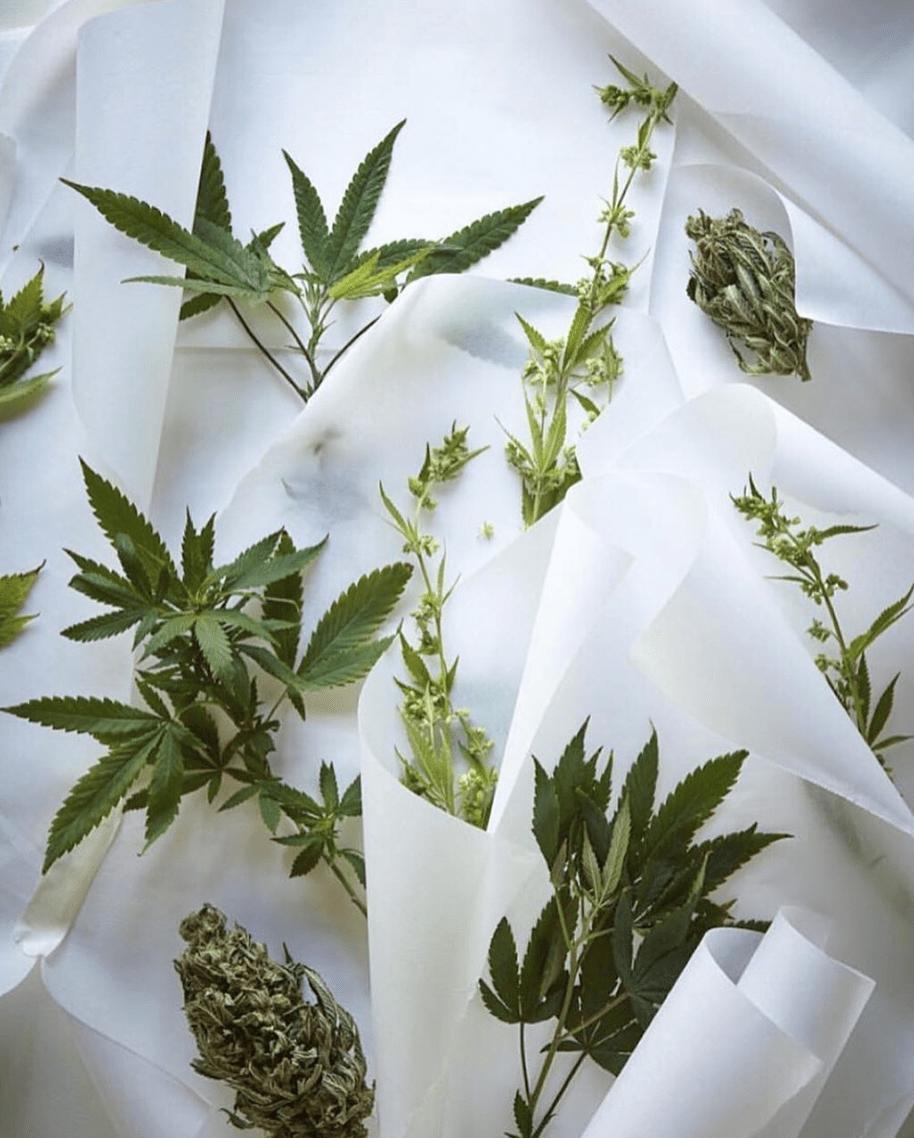 Cannabis Pressings
