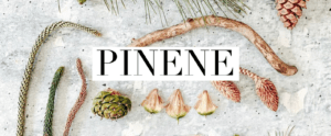 Terpene Tuesday: Pinene